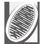 Integrative Medizin: Mitochondriale Therapie